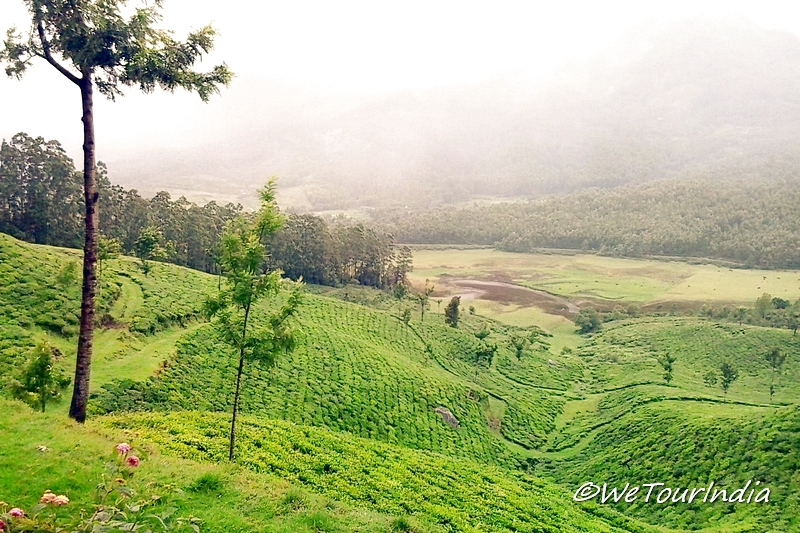 honeymoon Place Munnar_1